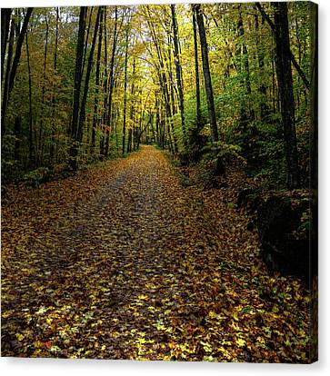 Canvas Print featuring the photograph Autumn Leaves On The Trail by David Patterson