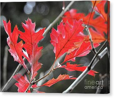 Canvas Print featuring the photograph Autumn Leaves by Peggy Hughes