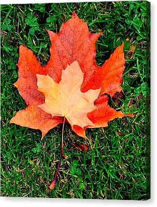 Autumn Leaves Two #2 Canvas Print
