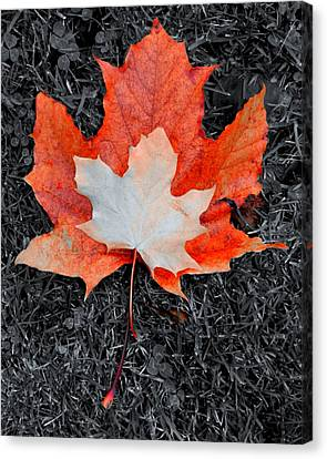 Autumn Leaves Two #3 Canvas Print