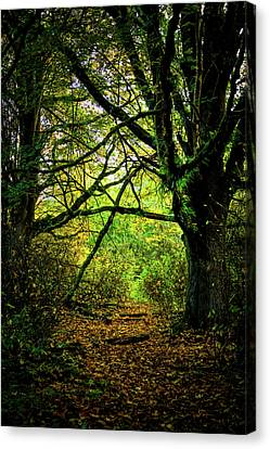 Canvas Print featuring the photograph Autumn Light by David Patterson