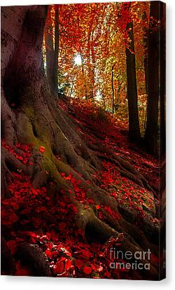 Autumn Light Canvas Print by Hannes Cmarits