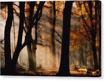 Autumn Light Canvas Print by Jan Paul Kraaij