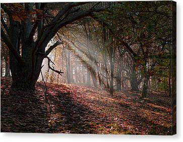 Autumn Light  Canvas Print by Scott Carruthers