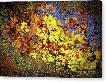 Autumn Light Canvas Print by Tatsuya Atarashi