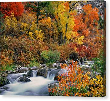 Autumn Magic Canvas Print by Leland D Howard