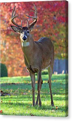 Autumn Majesty Canvas Print by Steve Gass