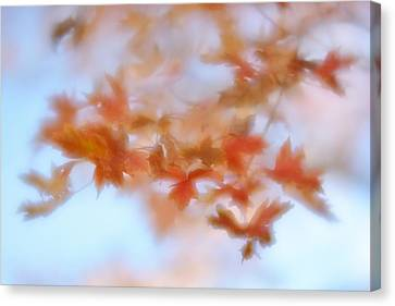 Canvas Print featuring the photograph Autumn Maple Leaves Soft by Diane Alexander
