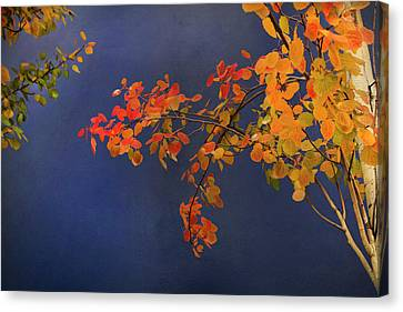 Canvas Print featuring the photograph Autumn Matinee by Theresa Tahara