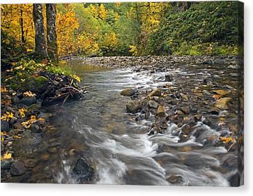 Autumn Meander Canvas Print by Mike  Dawson