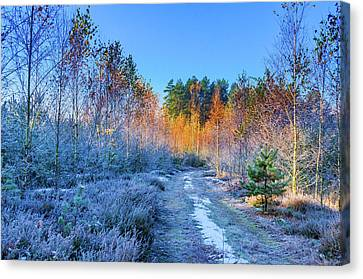 Canvas Print featuring the photograph Autumn Meets Winter by Dmytro Korol