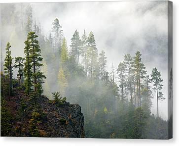 Autumn Mist Canvas Print by Mike  Dawson