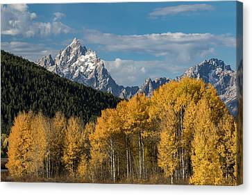 Autumn Morning Canvas Print by Andrew Wells