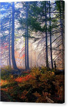 Autumn Morning Fire And Mist Canvas Print by Diane Schuster