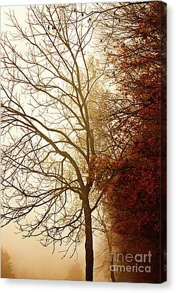 Canvas Print featuring the photograph Autumn Morning by Stephanie Frey