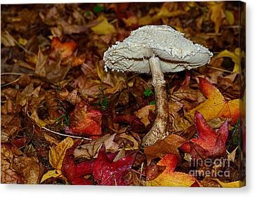 Autumn Mushroom Canvas Print by Kaye Menner