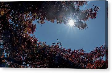 Autumn Oak And Sun Canvas Print by Mick Anderson