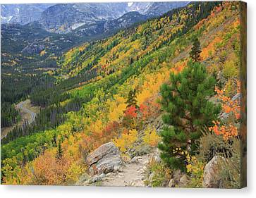Canvas Print featuring the photograph Autumn On Bierstadt Trail by David Chandler