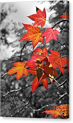 Autumn On Black And White Canvas Print by Kaye Menner