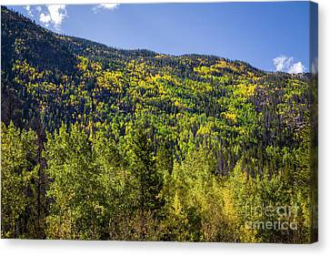 Autumn On Cameron Pass Canvas Print