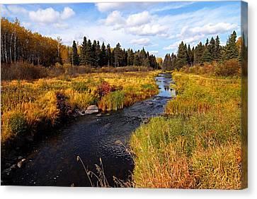 Autumn On Jackfish Creek Canvas Print