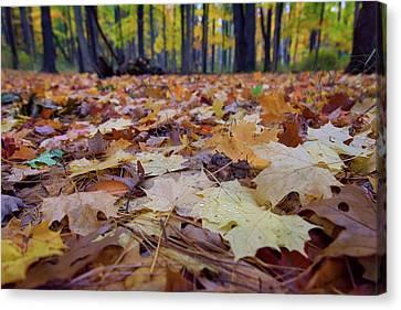 Autumn On The Forest Floor Canvas Print by Rick Berk