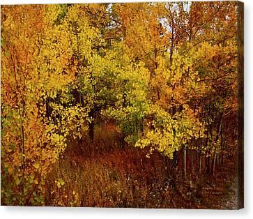 Nature Scene Canvas Print - Autumn Palette by Carol Cavalaris