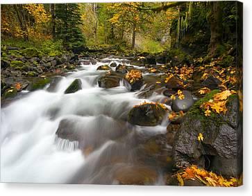 Autumn Passages Canvas Print by Mike  Dawson