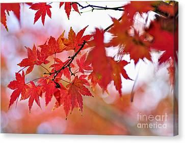 Autumn Pastel Canvas Print by Kaye Menner