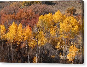 Autumn Patchwork Canvas Print by Dennis Hammer