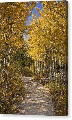Autumn Path Canvas Print by Andrew Soundarajan