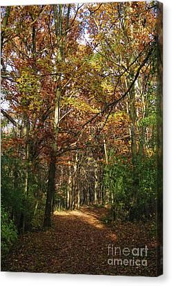 Autumn Path At St Croix Bluffs Canvas Print