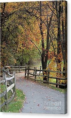 Autumn Path In Park In Maryland Canvas Print by William Kuta