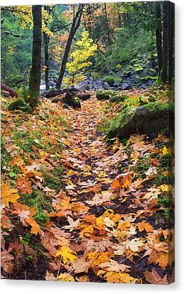 Autumn Path Canvas Print by Mike  Dawson