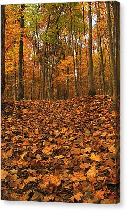 Autumn Path To The Forest Canvas Print by Dan Sproul
