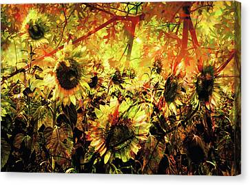 Autumn Canvas Print by Paul Drewry