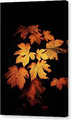 Autumn Photo Canvas Print
