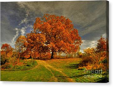 Picnic Table Canvas Print - Autumn Picnic On The Hill by Lois Bryan