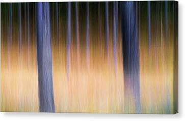 Canvas Print featuring the photograph Autumn Pine Forest Abstract by Dirk Ercken