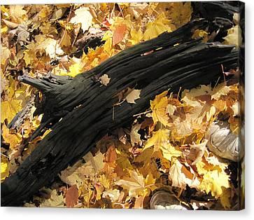 Autumn Poetry  Canvas Print by Leon Zernitsky