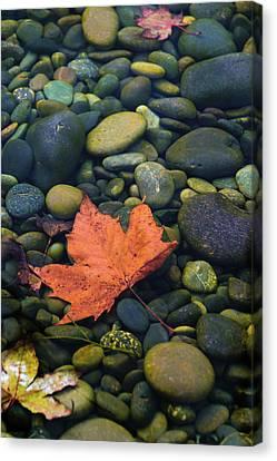 Canvas Print - Autumn Pool 2017 by Steven Richman