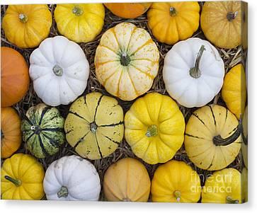 Autumn Pumpkin Pattern  Canvas Print