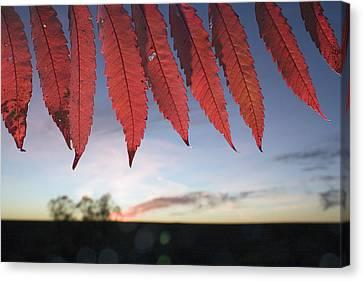 Autumn Red Sumac Leaves Canvas Print by Jim Richardson