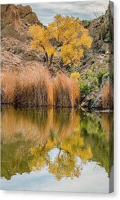 Autumn Reflection At Boyce Thompson Arboretum Canvas Print