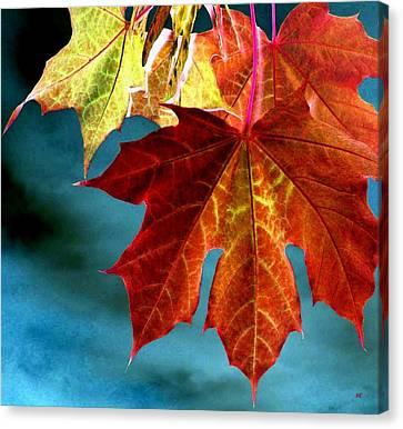 Canvas Print featuring the photograph Autumn Regalia by Will Borden