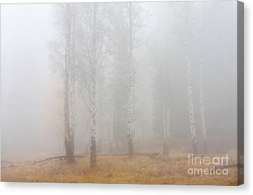 Autumn Reveals Canvas Print by Mike  Dawson