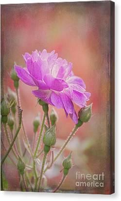 Autumn Rose Canvas Print by Elaine Teague
