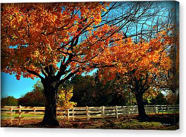 Canvas Print featuring the photograph Autumn Rows by Joan  Minchak