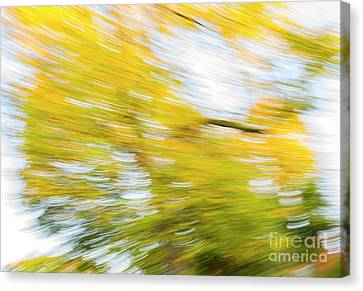 Abstract Movement Canvas Print - Autumn Rush by Tim Gainey