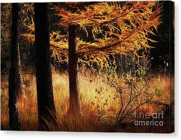 Autumn Scene In A Dark Forest Canvas Print